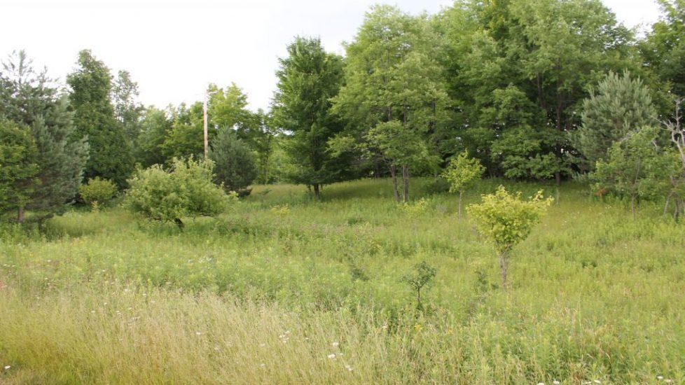 #484 Parcel #13 7.27 acres