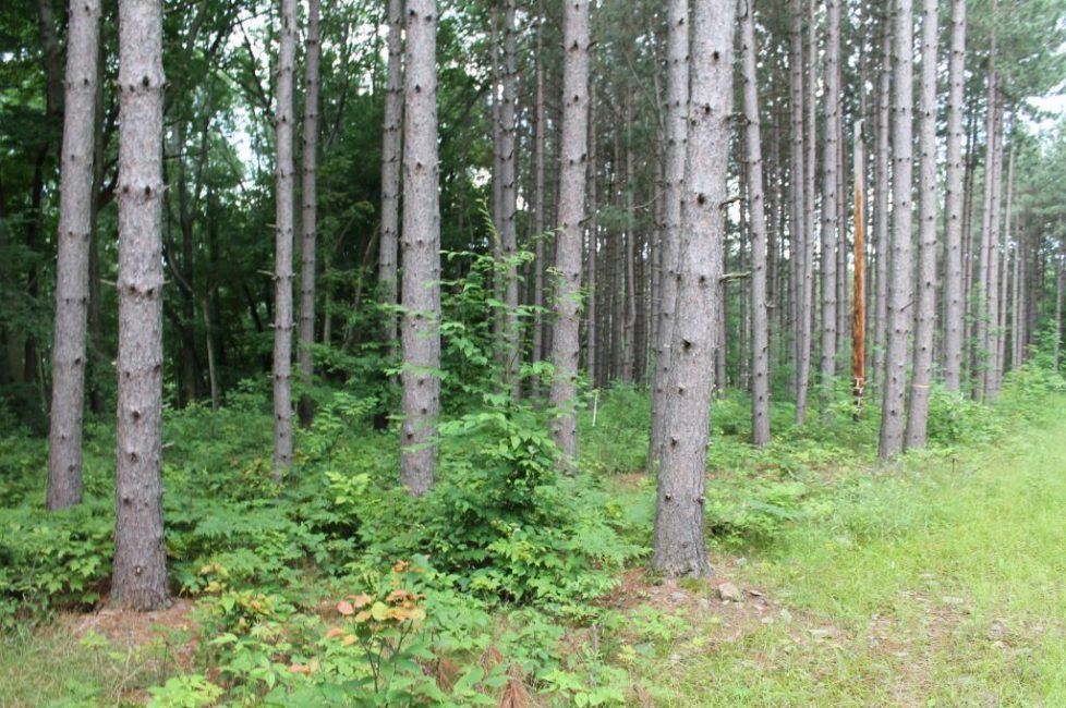 #478 Parcel #7 7.5 acres