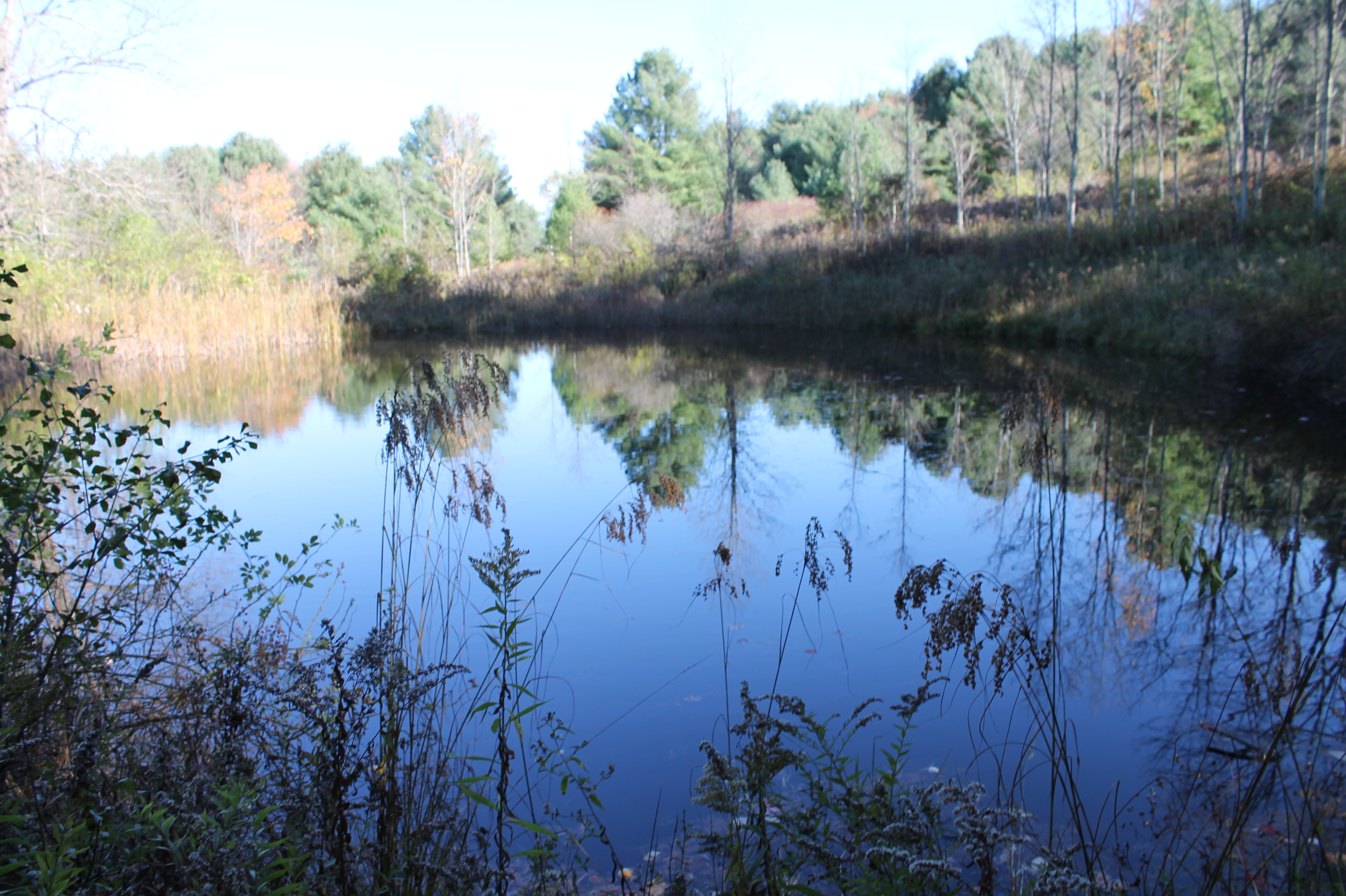 SOLD File #453 Parcel #12 T/Friendship Allegany County